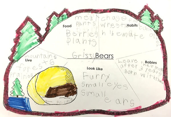 Bear research by 1st Grade students