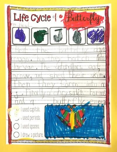 Butterflies in First Grade: Butterfly Life Cycle Writing.  GradeONEderful.com