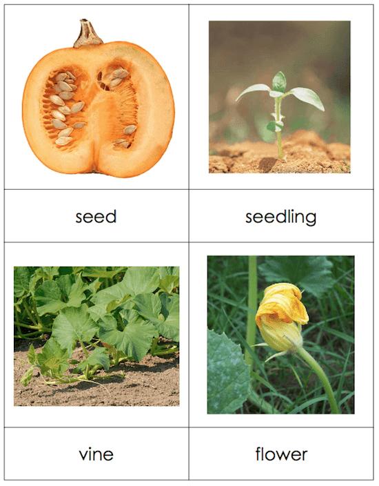 Pumpkin Circle Book Review by GradeONEderful.com