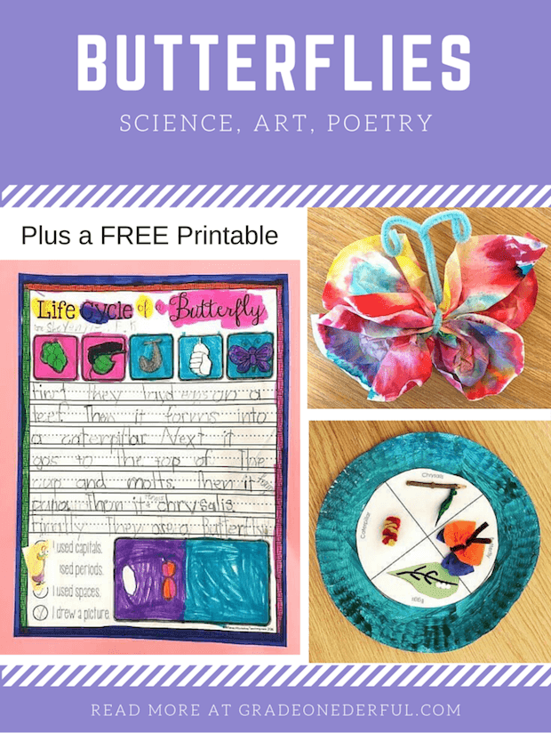 Butterflies in First Grade: Science, art, poetry and free printables. GradeONEderful.com